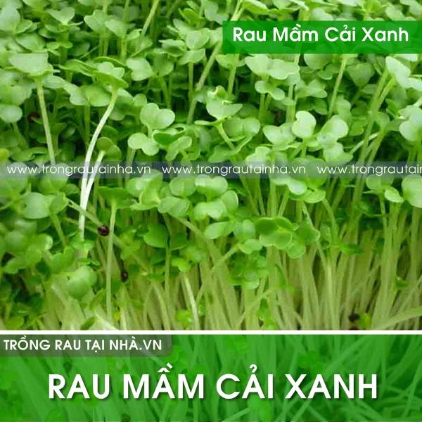 Rau mầm cải xanh đà lạt